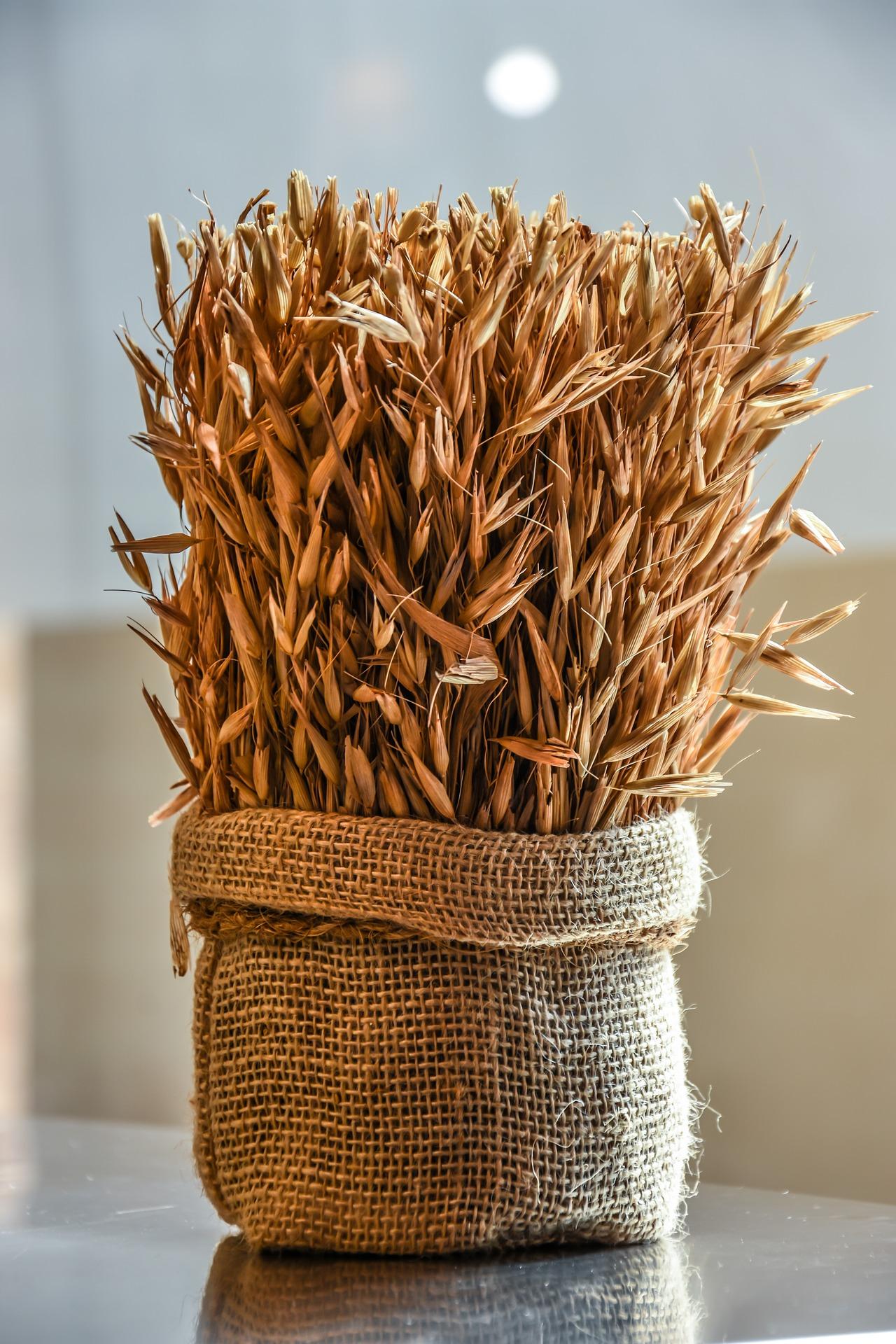wheat-2190554_1920